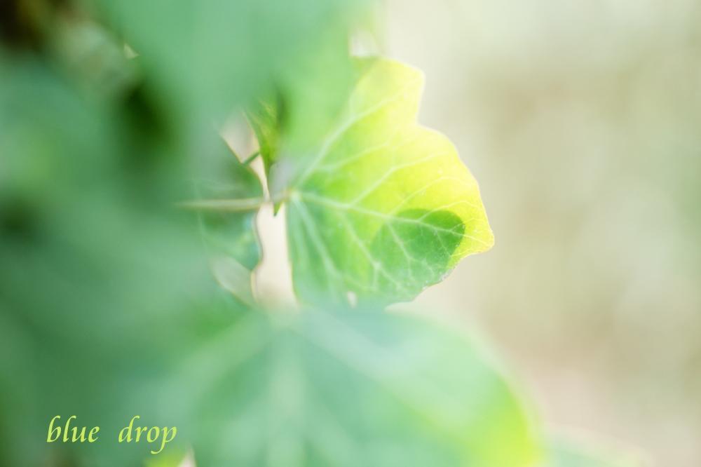 緑色の生*