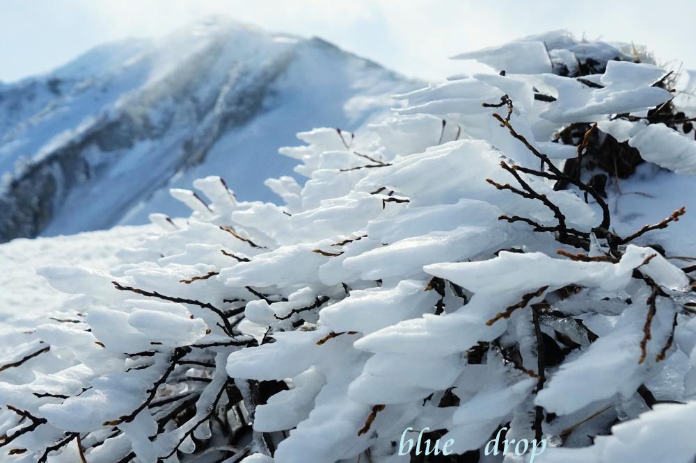 冬の風物詩*