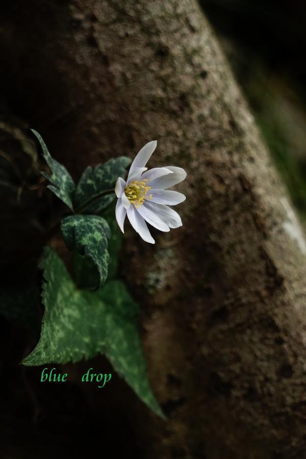 ひっそりと咲く*