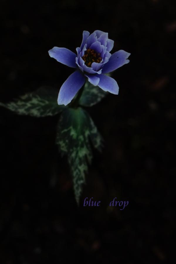 瑠璃色の花*