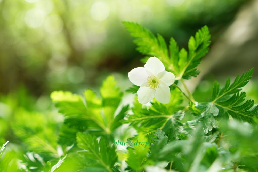 光の中で咲く*