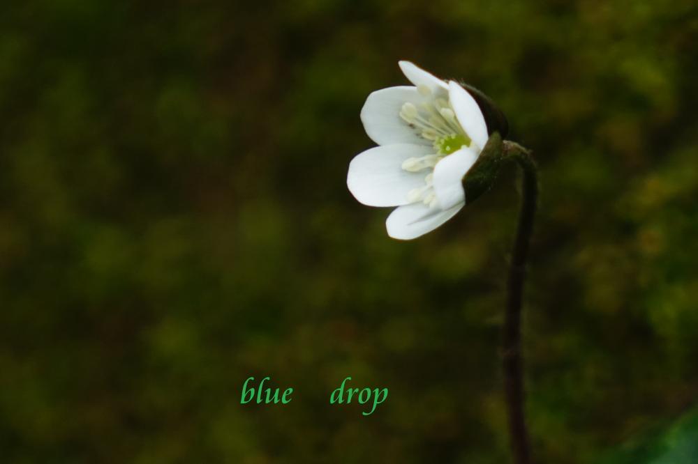 考える花*
