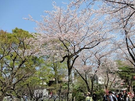 20170401桜