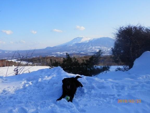 黒ラブと浅間山