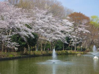 貝殻山公園の桜満開
