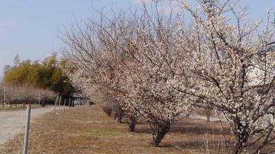 春一番が通過