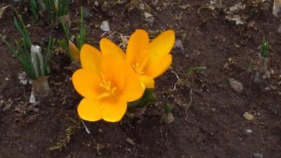 春が早まる