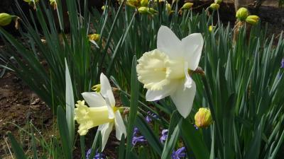 庭も春になる