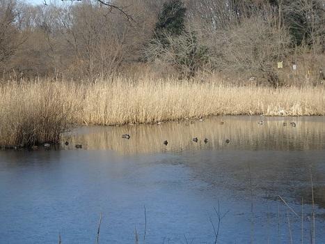 「北本自然観察公園~冬の風景」