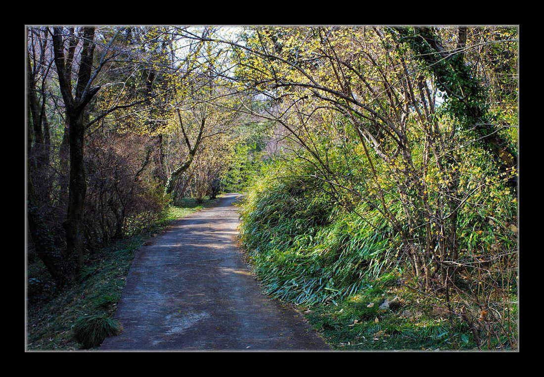 蝋梅の咲く小路