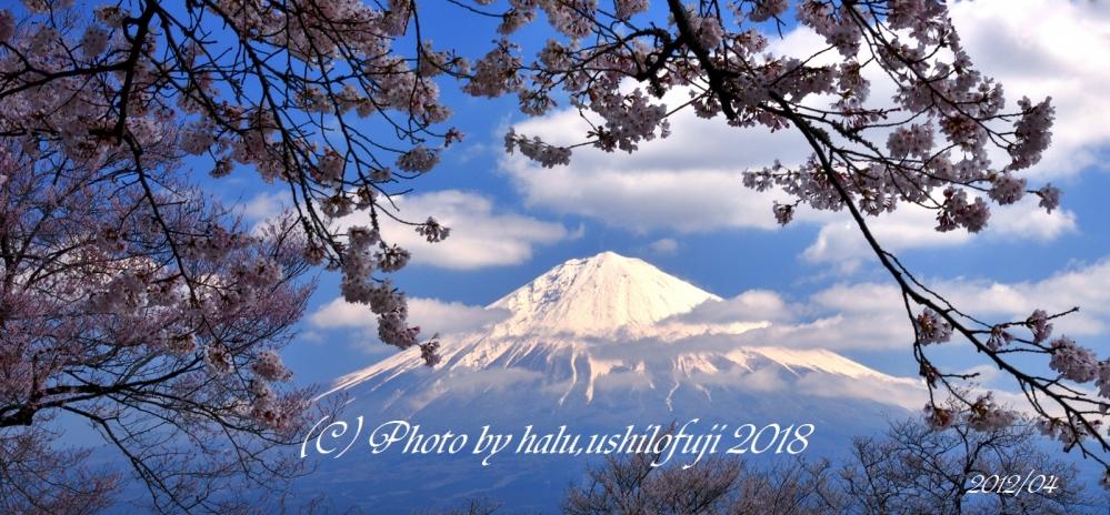 興徳寺2012SNF