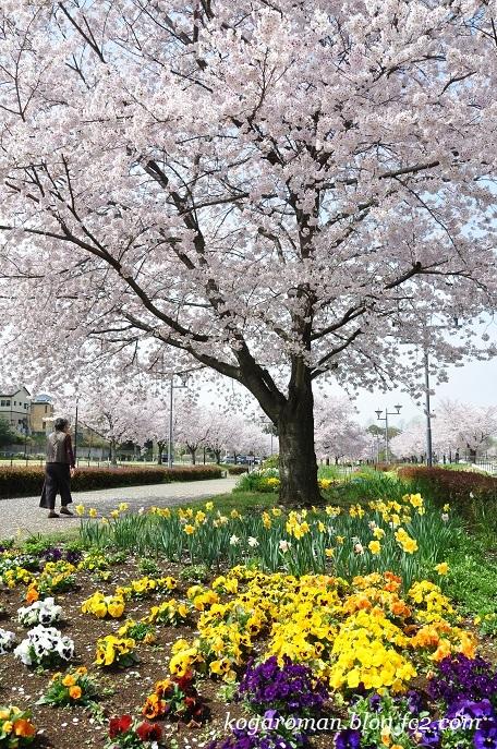 01古河総合公園