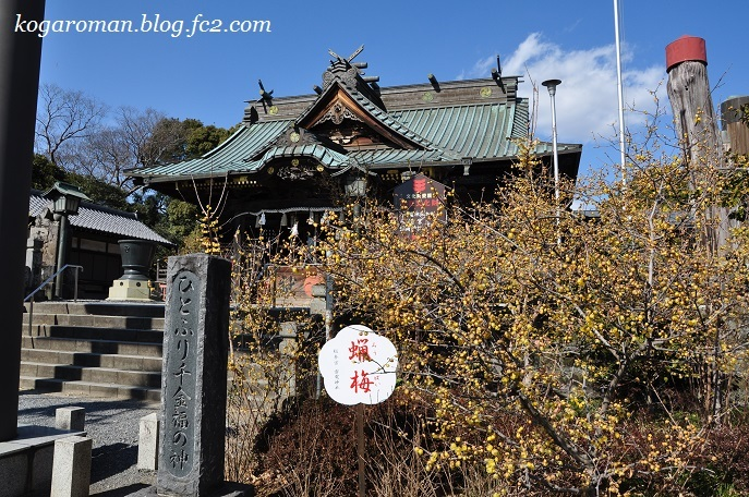 雷電神社の梅と蝋梅