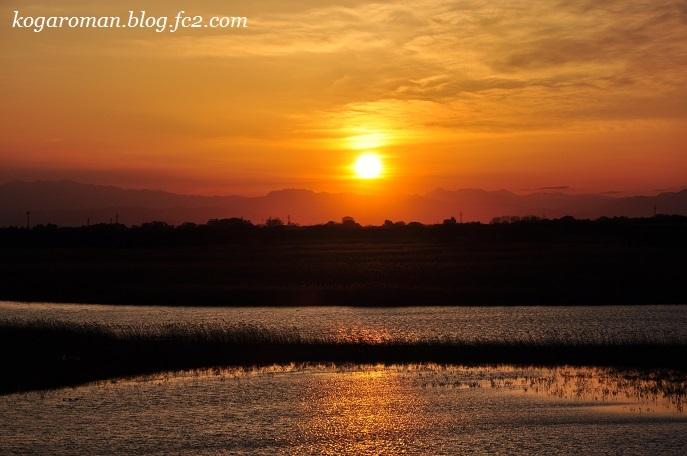 渡良瀬遊水地の落陽