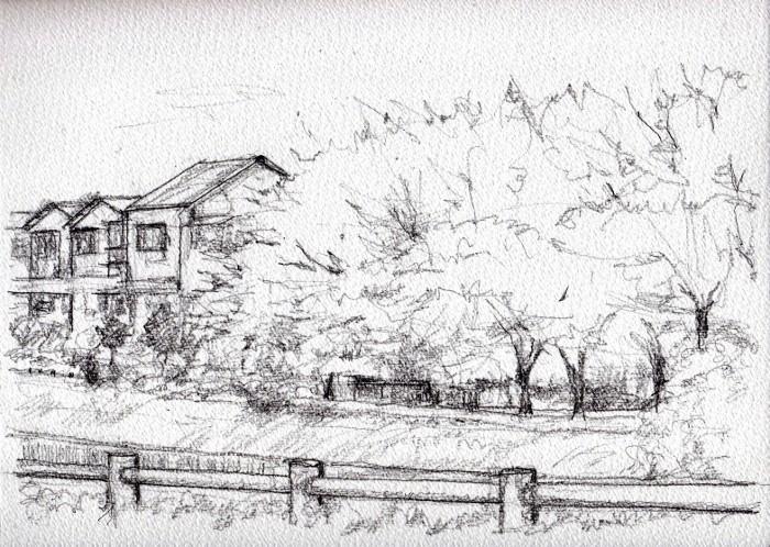 天の川沿いの桜 デッサン (700x498)