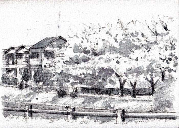 天の川沿いの桜グリザイユ (700x503)