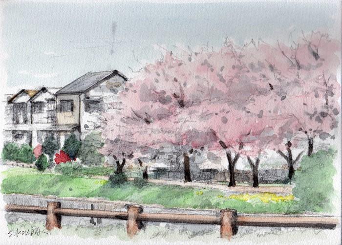 天の川沿いの桜 (700x501)
