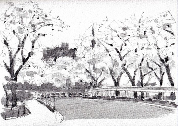 成田公園の桜 グリザイユ (700x498)