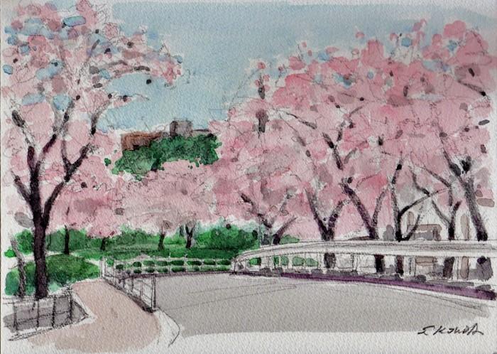 成田公園の桜 (700x498)
