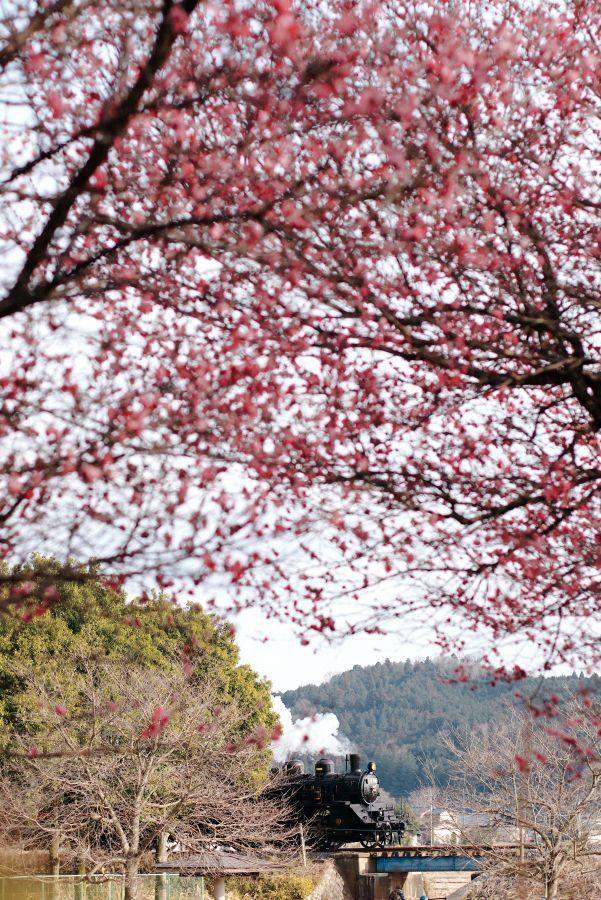 益子~北山_180303(Kodachrome25)