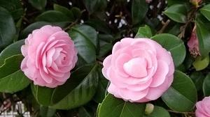 20180318_151322春の花