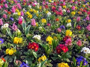 stpatricksspringflowers03182