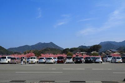 20180312_萩しーまーと親水公園の河津桜IMG_5686