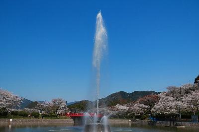 20180328_甘木公園でお花見IMG_2563-5℃