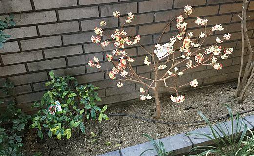 住真田山201803-2