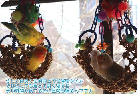 ①4羽仲良く