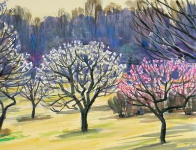 昭和公園の梅