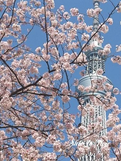 DSC_0728_20180331_03_大横河親水公園の桜