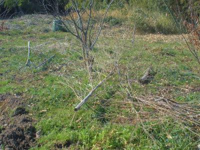 3.4放置の竹
