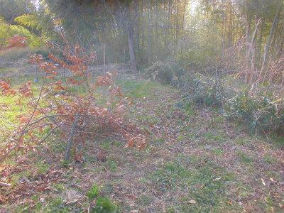 3.4栗の木伐採