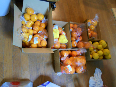 3.11買って来た柑橘1