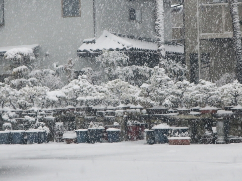 「積雪&FMトランスミッター」①