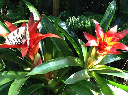 響灘緑地熱帯生態園
