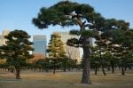 2.皇居前広場(皇居外苑)-100D 1712qr