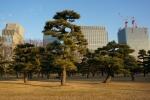 7.皇居前広場(皇居外苑)-97D 1712q