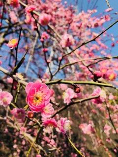 もうすぐ春_001