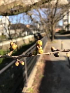 もうすぐ春_005