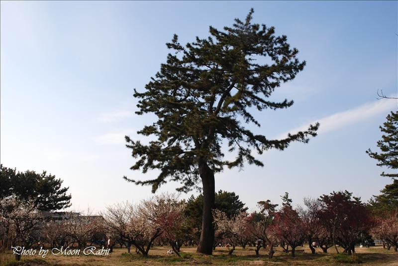 志島ヶ原 桜井梅林公園