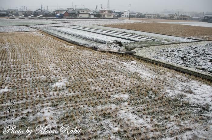 横黒の田畑の薄雪 愛媛県西条市横黒