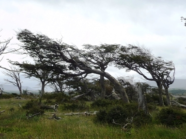 斜めの木(例)