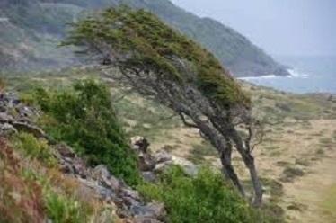 斜めの木(例2)