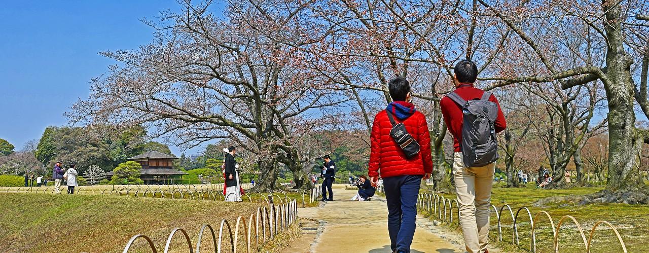 20180325 後楽園今日の開花宣言が出ました桜林の桜の様子のワイド風景 (1)