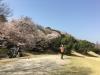 0331_桜