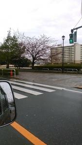 180310 桜が