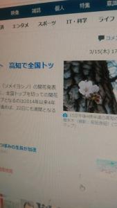 180316 高知で開花