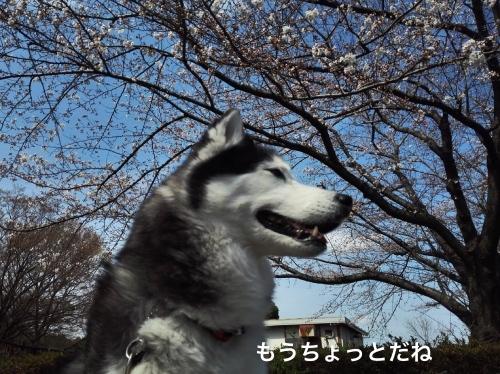 IMG_20180324_103520_Fotor.jpg